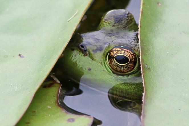 frog - John pics