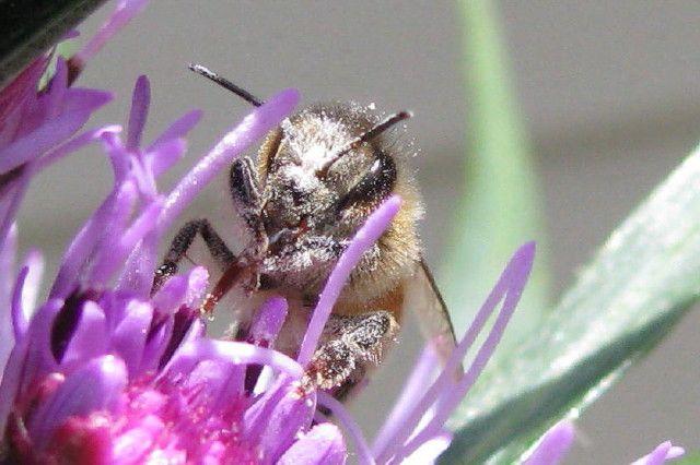 bee & pollen - John